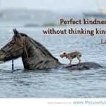 lao tzu perfect kindness